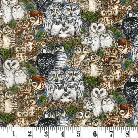 AC362 Owl Families