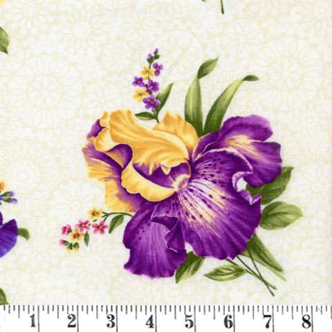 AC572 Irresistible Iris - Cream Iris