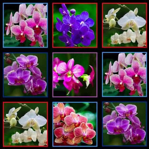 AC956 Digital Orchids - Block Panel