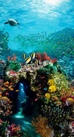 AD152 Beneath the Waves - Digitally Printed Ocean Panel