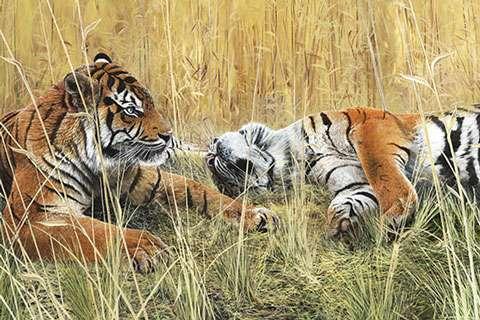 AD370 Fields of Gold - Tiger Panel (Digital Print)