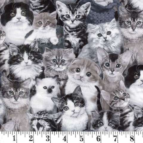 AE043 Cat Breeds - Grey Cats Packed