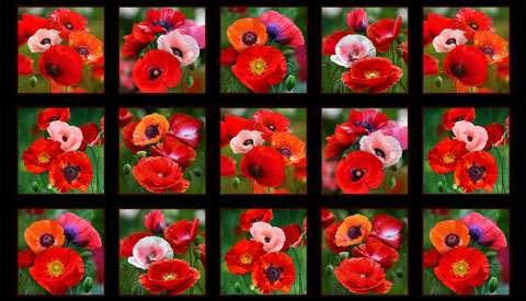 AE284 Poppies - Panel Black 60cm