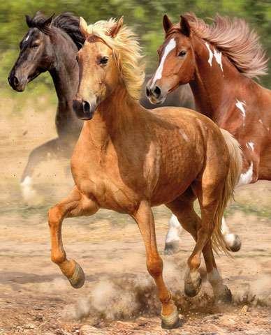 AE353 Hold Your Horses - Galloping - Digital Panel