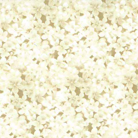 AE475 Fairy Whispers - cream flowers