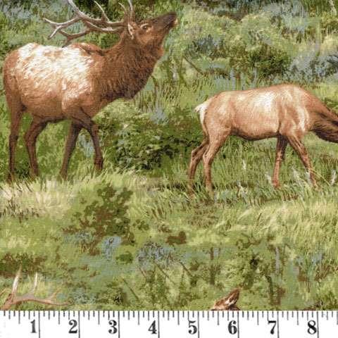 AE479 Born Free - Elk