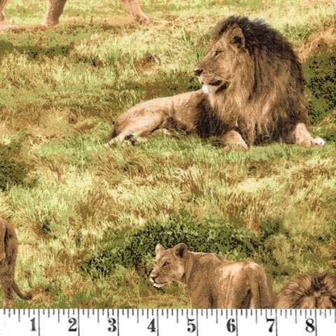 AE480 Born Free - Lions
