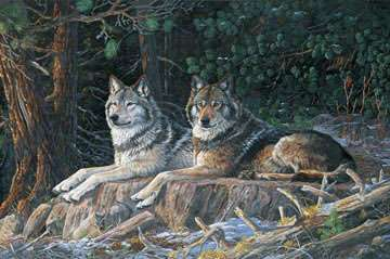 AE860 Resting Point Wolves - Digital Panel 70cm