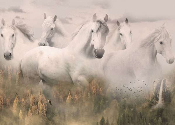 AG298 Call of the Wild - Dawn Horses - Panel preview