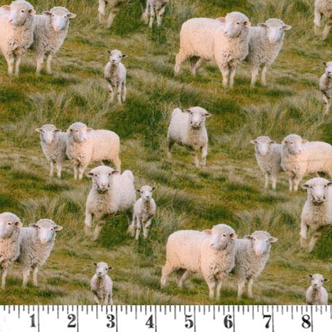 AH842 Merino Muster - Sheep preview